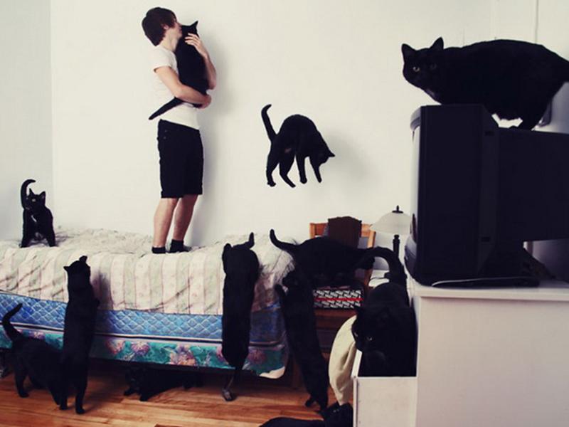 Квартира с черным котом