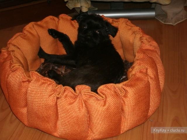 Лежанка для собак или кошек своими руками