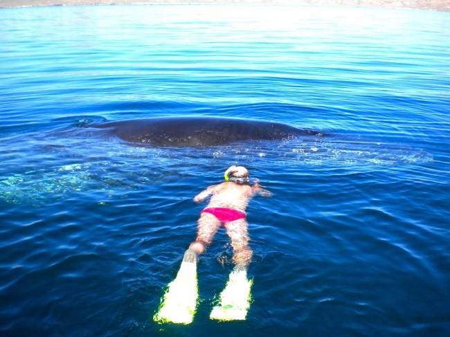 Люди спасли горбатого кита, …