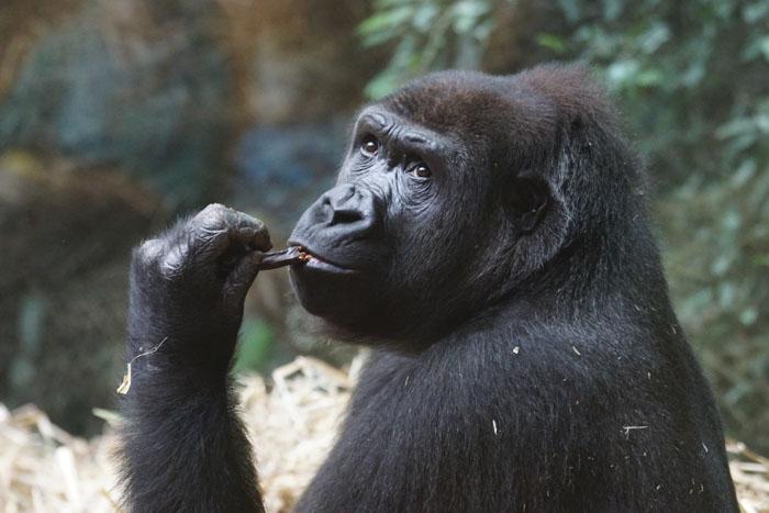 Любопытные подробности о животных