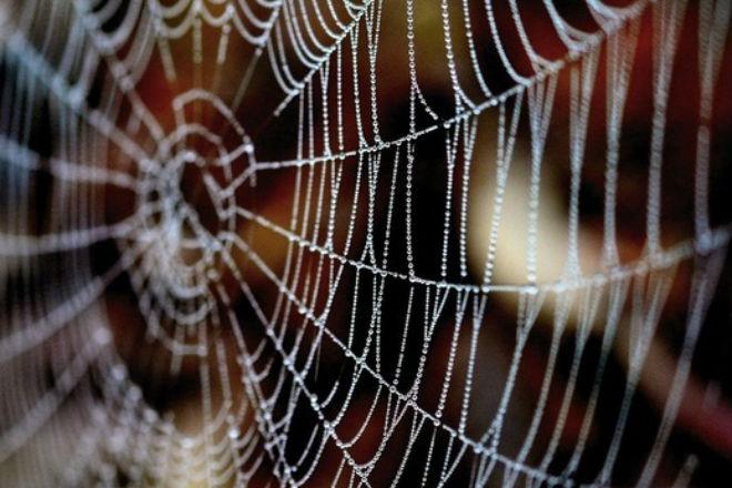 Москвича укусил паук из пакета с инжиром