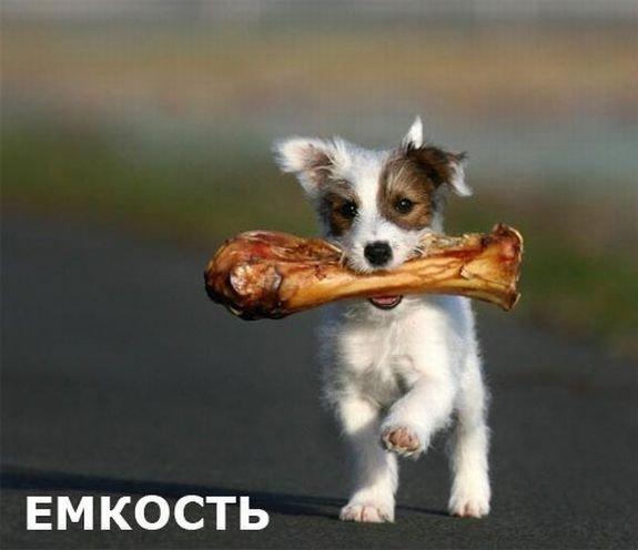 Игра слов прикол, русский язык, юмор