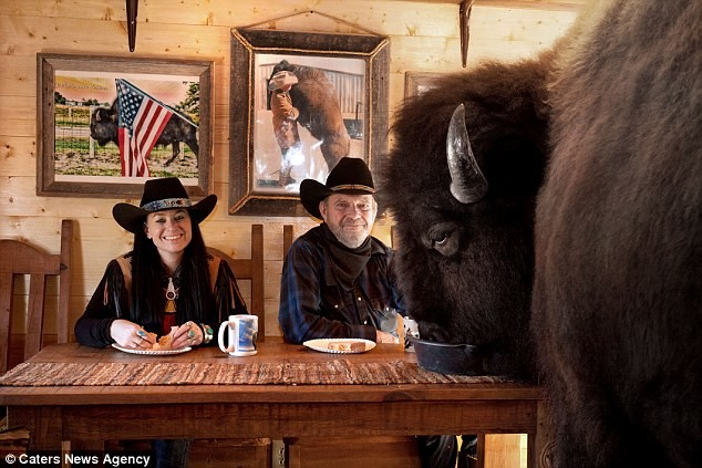 Семейная пара из Техаса держит в доме бизона весом больше тонны