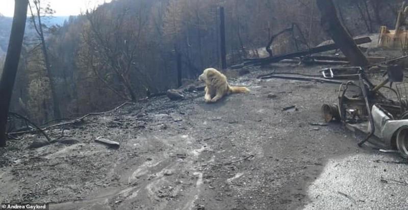 В Калифорнии брошенный из-за пожаров пес месяц верно ждал хозяйку у сгоревшего дома