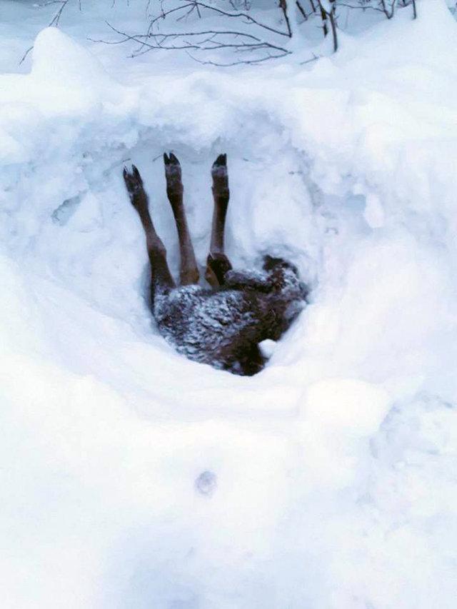 Три ноги торчало из-под снежной глади… Мужчина остановил грузовик и принялся копать!