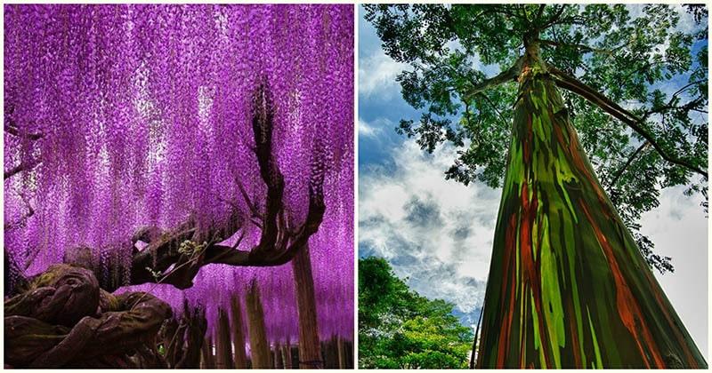 12 удивительно странных деревьев со всего мира — это стоит увидеть