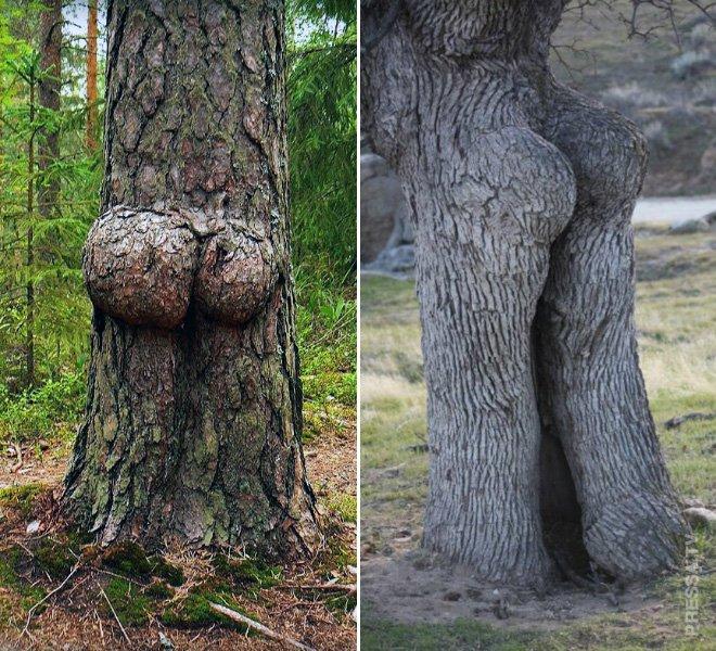 Прикольные деревья, которые выглядят, как человеческие тела