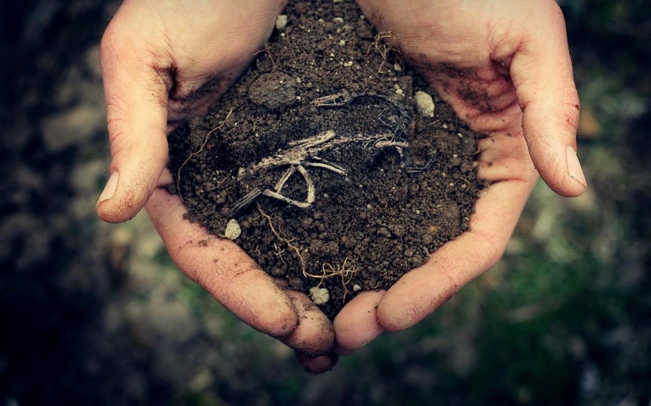 Картинки по запросу особенности русской почвы