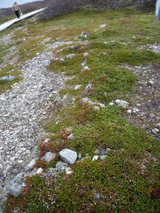 Каменные лабиринты на Соловецких островах