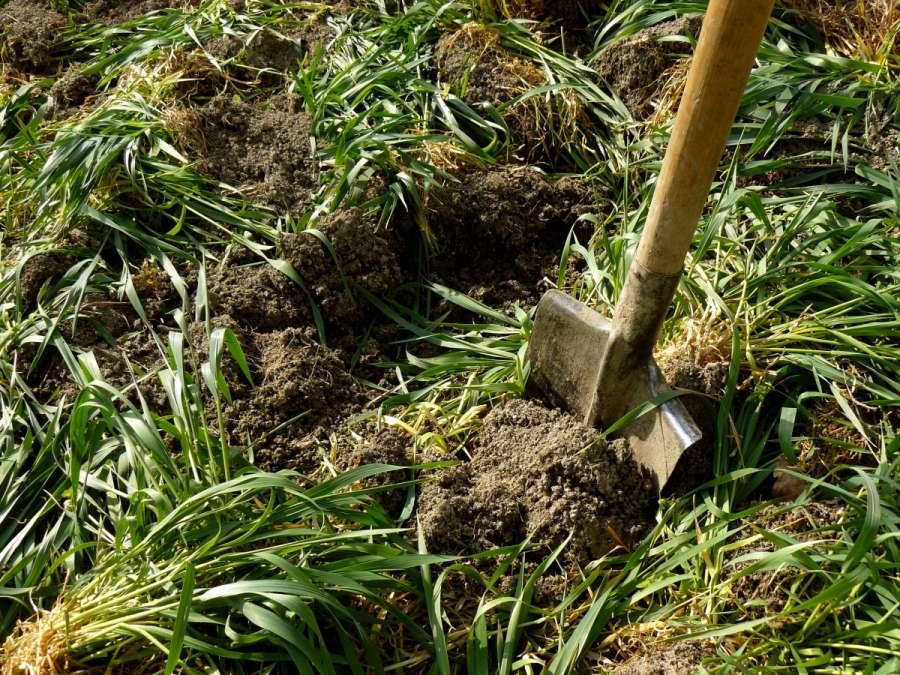 Какие сидераты сеять весной? Подбор сидератов для огородных культур