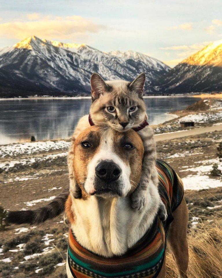 верность, фото кота и пса путешествия кому-то