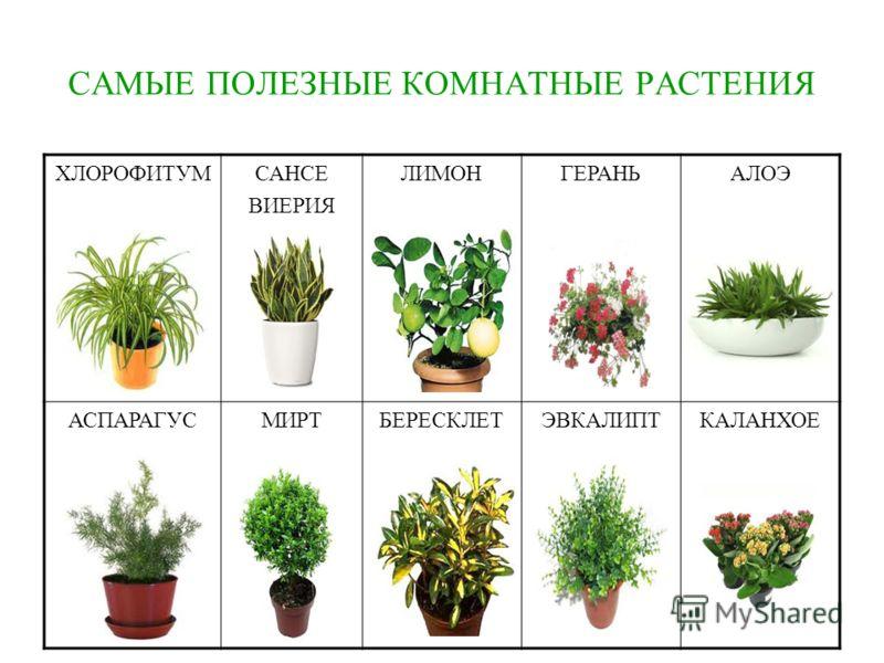 Растения которые помогают человеку
