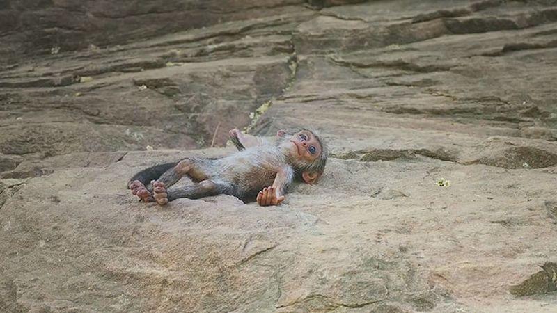История о том, как обезьяны приняли в семью робота