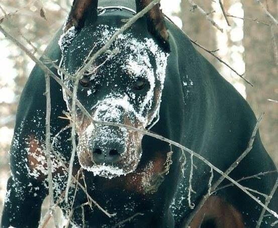 11 самых страшных пород собак, которые только есть на нашей планете! животные