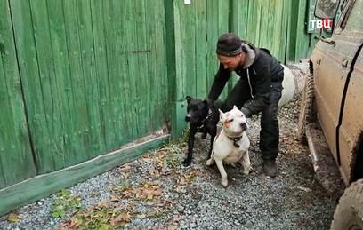 Бойцовские собаки напали на ребенка по Челябинском