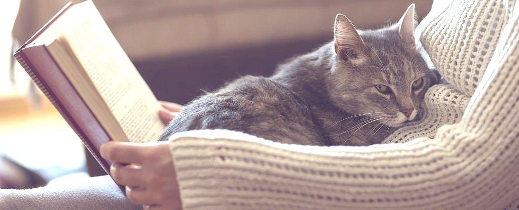 Почему кошки мнут нас своими лапками?