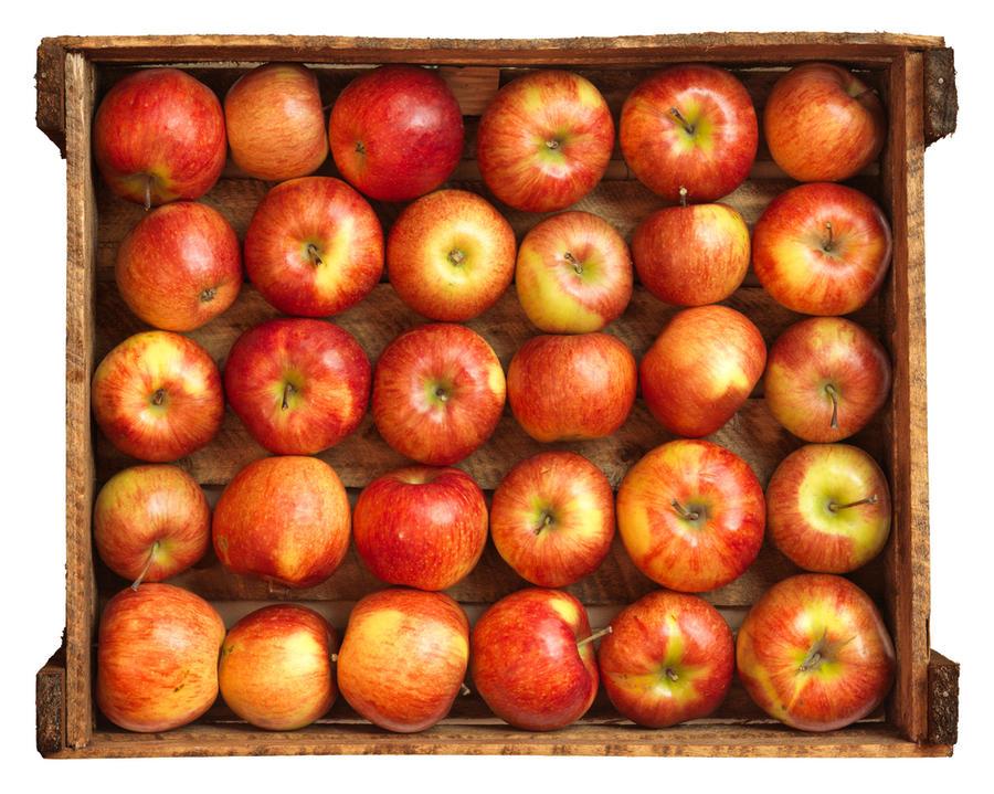 Как сохранить яблоки до весны дача,сад и огород,урожай