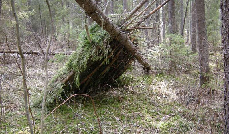 Советы для туристов в лесу