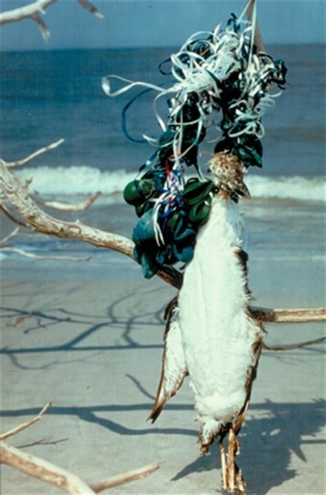 В океане уже образовались пять мусорных островов вымирают, животные, мусор, природа, уничтожение, человек