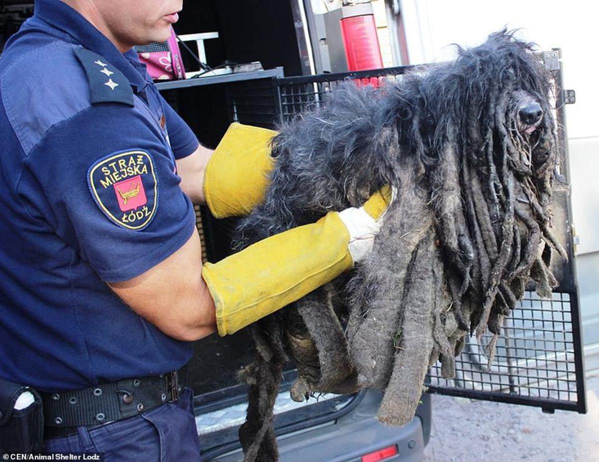 Страшно заросшее шерстью животное спасли от гибели