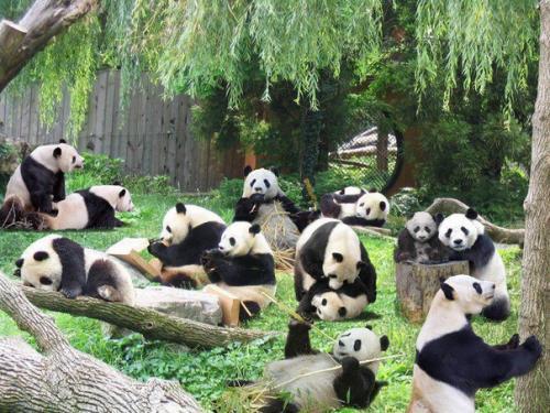 Зоопарк в Токио закрывается …