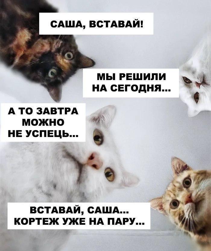 Не вор в законе, а просто вор Белоруссия,Инаугурация,Лукашенко,общество