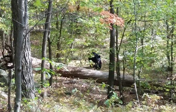 15. Уэст Милфорд сделал этот снимок во время похода в Нью-Джерси, за мгновение до того, как этот медведь напал на него и убил жуткие моменты, за мгновение до, за секунду до, за секунду до смерти, катастрофы, печальные кадры, трагедии