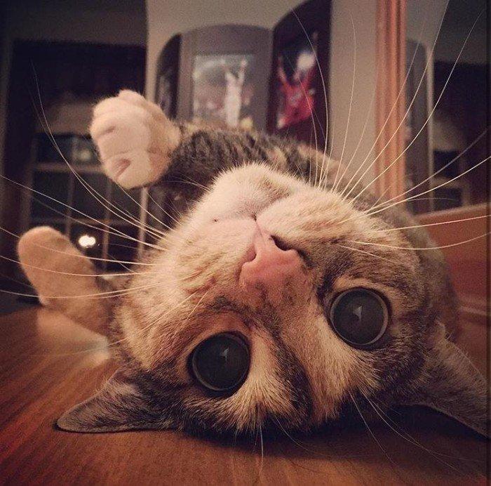 Фото кота с глазами