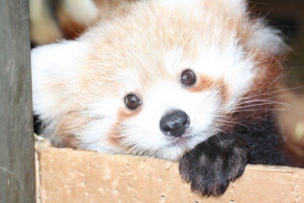 Все хороши, пока маленькие: топ-20 милых фотографий животных 2014
