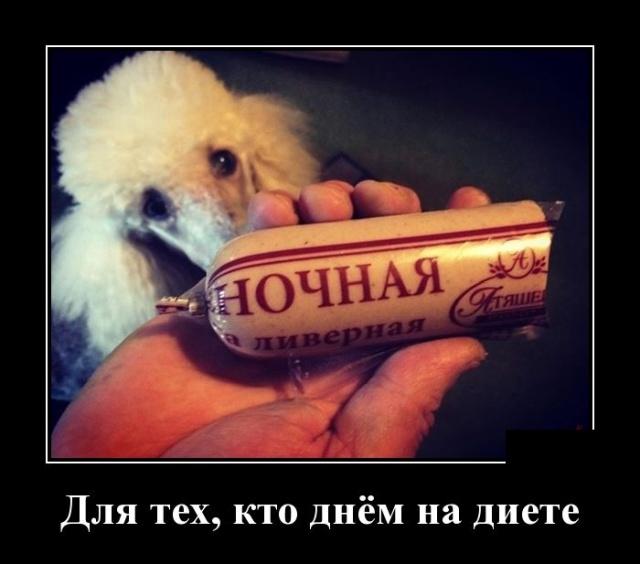 Пьянь! Кругом одна пьянь истории из жизни