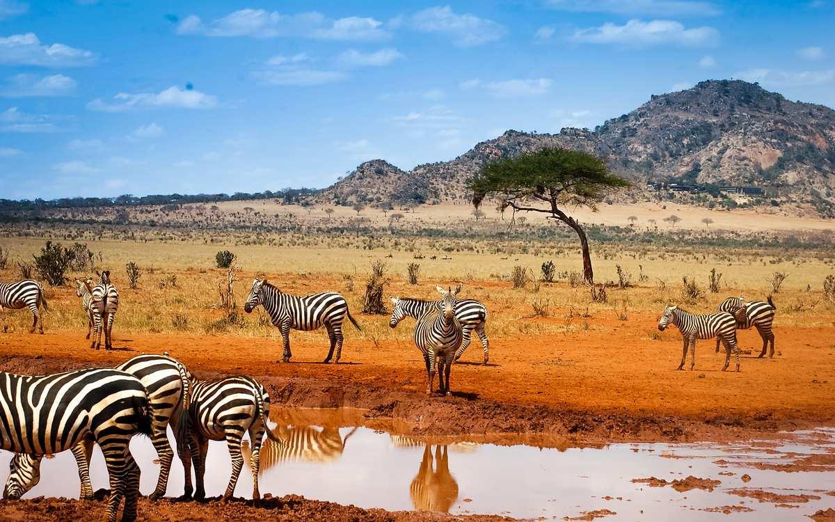 Все про африку фото