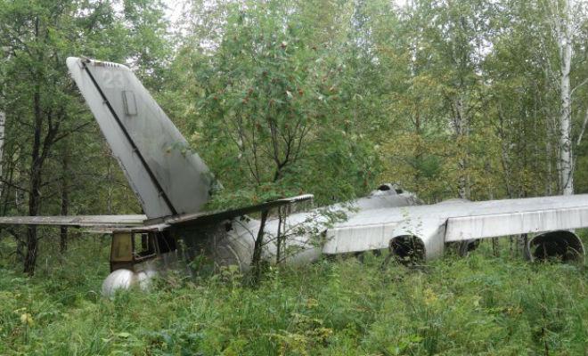 Самолет-призрак времен Второй мировой: случайная находка грибника война