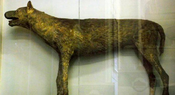 Булленбейцер Петра I — вымершая собака быкодав
