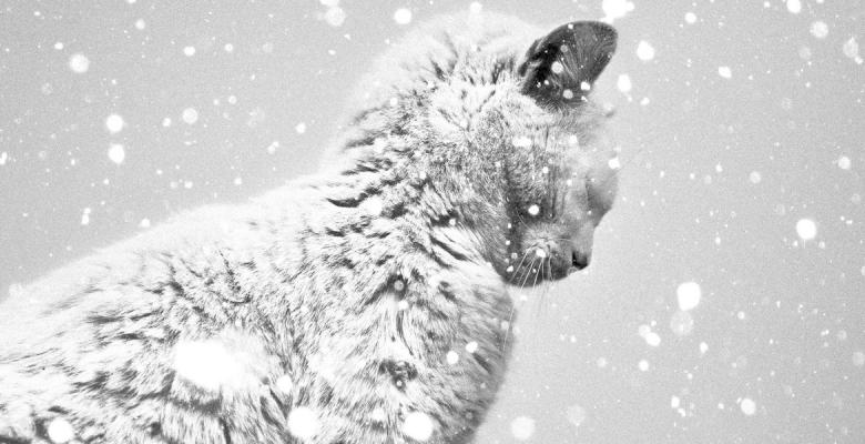 Зимняя хандра: как не впасть…