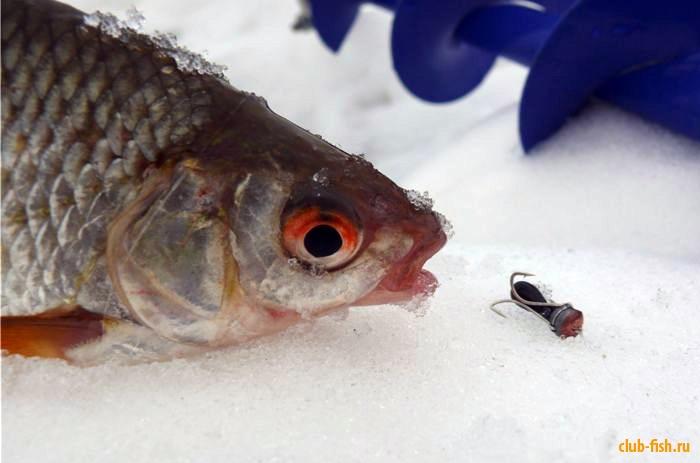 Зимняя рыбалка на чёртика