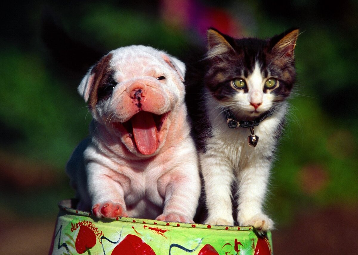 Картинки с котятами и щенками смешные