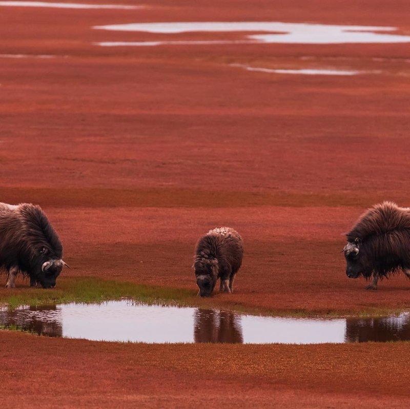 Остров Большой Бегичев, море Лаптевых, Якутия горы, леса, природа, природа России, российская природа, россия