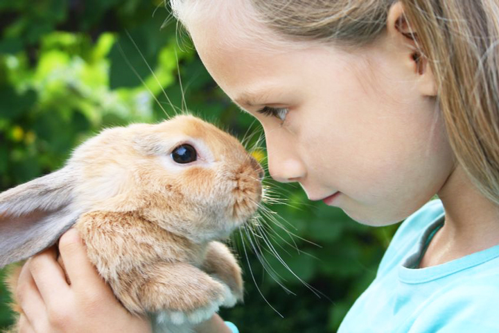 Исцеление и общение с животными…