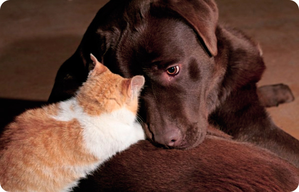 История из жизни - о щенке и кошке)