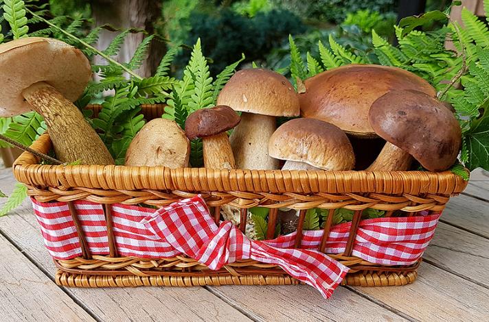 Необычные факты о грибах. Об этом могут не знать любители «тихой охоты».