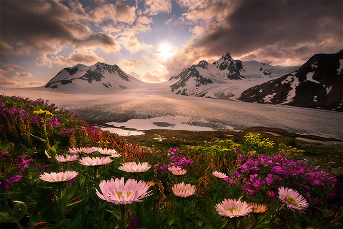 Дикая природа Аляски