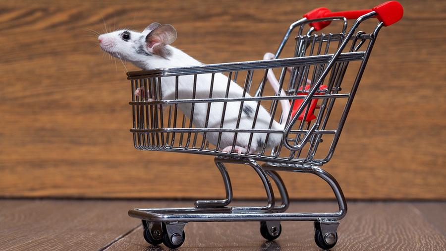 Крысы в супермаркете!