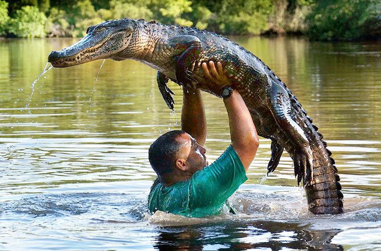 Картинки с крокодилами приколы