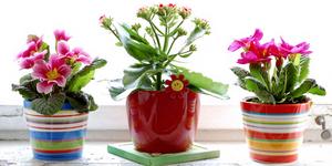 Комнатные растения и здоровье человека