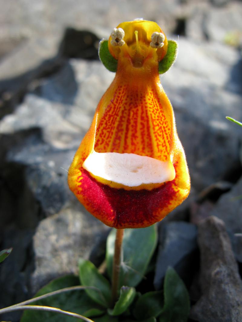 Открытки необыкновенные цветы, поздравить
