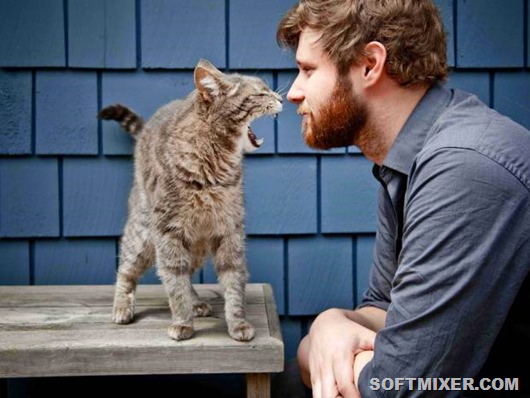 Человек кошке не хозяин