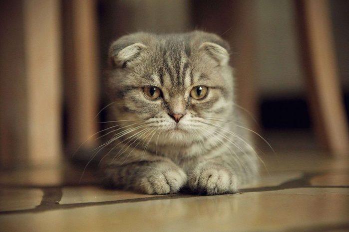 Кошки - лучшие доктора!