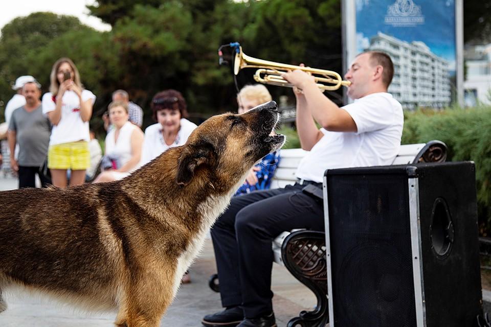 Собака и человек - наÑтоÑщие друзьÑ.
