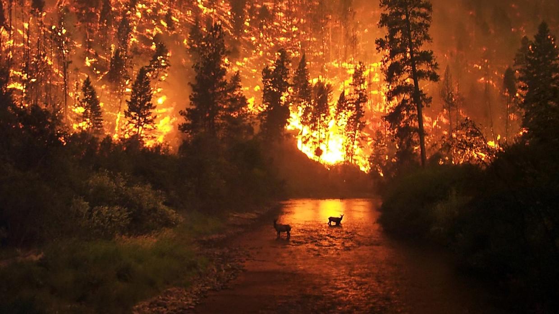 Четыре спасателя погибли при тушении лесных пожаров в Каталонии Происшествия