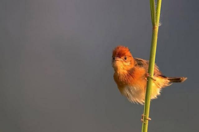 Удивительные птички